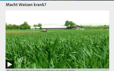 Macht Weizen krank? Ein guter TV Beitrag in der ARD