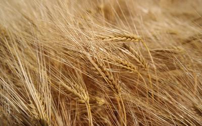 Versteckter Weizen oder Liste der zu kennzeichnenden Nahrungsmittelallergene